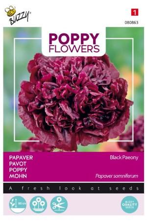 Black Paeony - Papaver...