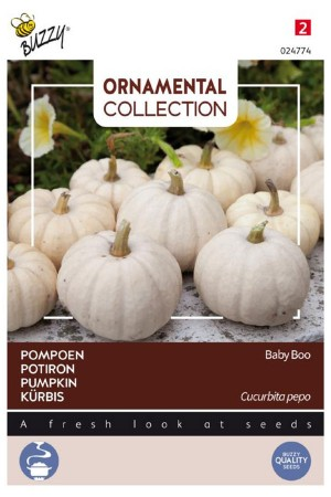 Baby Boo - Pompoen