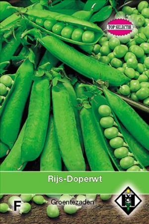 Alexandra - Green Pea