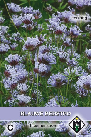 Oosters Bedstro - Asperula
