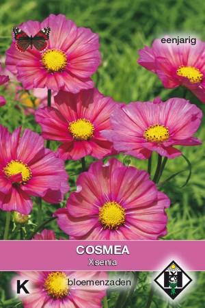 Xsenia Cosmos seeds