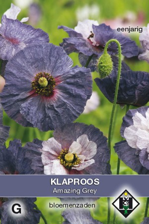 Amazing gray - Papaver