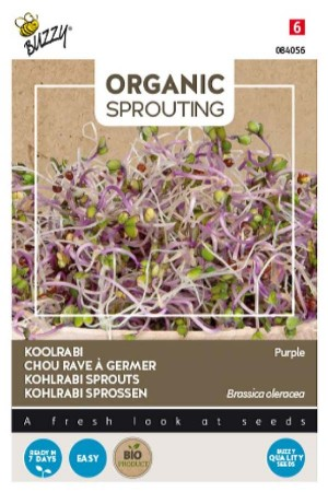 Kohlrabi purple - Sprouts...