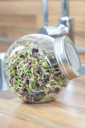 Sprouting Jar - Spicy Mix