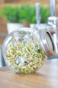 Sprouting Jar - Salad Mix