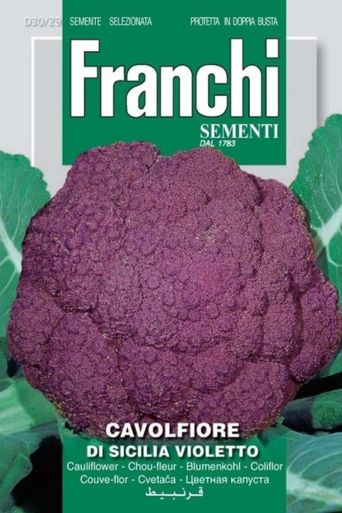 Di Sicilia Violetto - Paarse Bloemkool