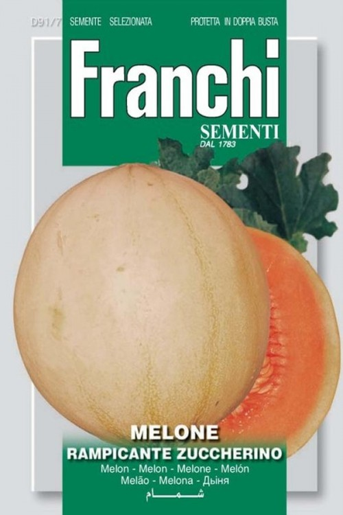 Rampicante Zuccherino - Meloen
