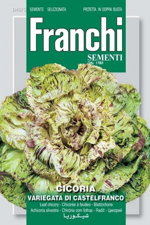 Variegata di Castelfranco - Radicchio Roodlof