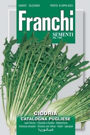 Catalogna Pugliese - Chicory