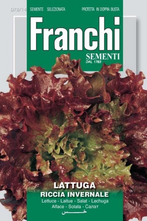 Riccia invernale - Frisee D Amerique - Kropsla