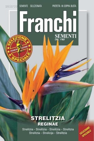 Bird of paradise flower - Strelitzia