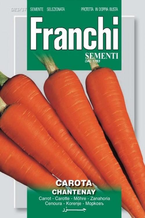 Chantenay - Carrot