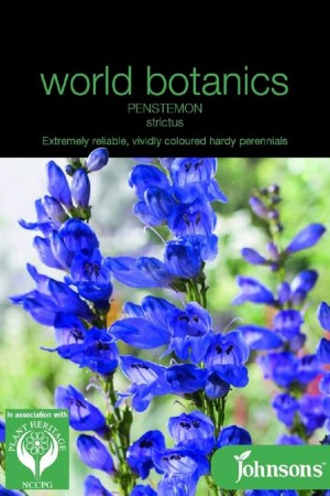 Penstemon strictus -...