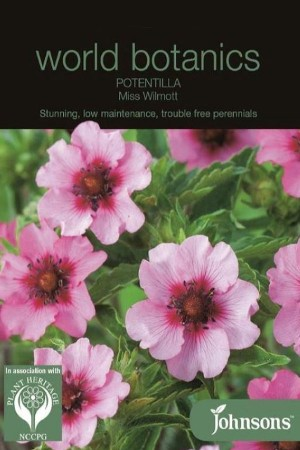 Miss Wilmott - Potentilla...