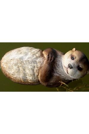 Otter op rug 29cm -...