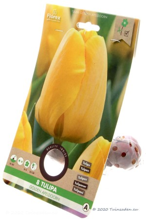 Tulpen Golden Apeldoorn -...