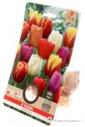 Gemengde Triumph Tulpen - Mixed Tulpenbollen