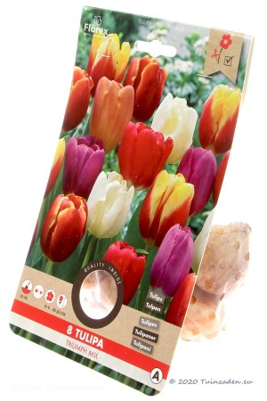Mixed Triumph Tulips -...