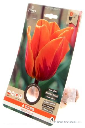Tulips Princess Irene -...