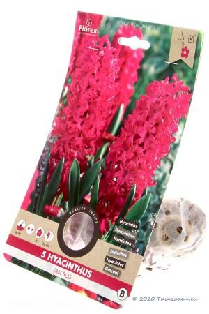 Hyacinth Jan Bos - Red-pink...