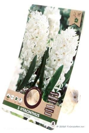 Hyacint Aiolos - Witte Hyacintenbollen