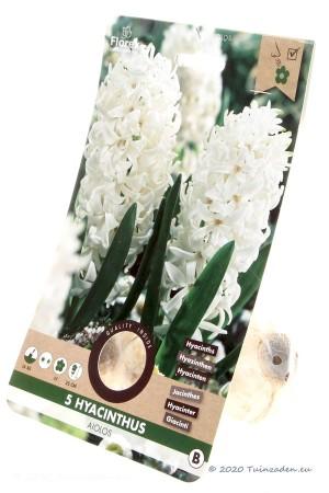Hyacinth Aiolos - White...
