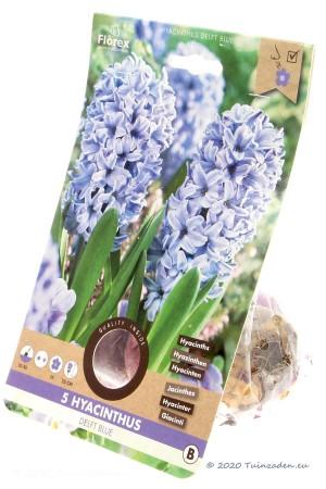 Hyacinth Delft Blue - Blue...