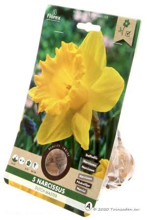 Narcis Dutch Master - Gele...