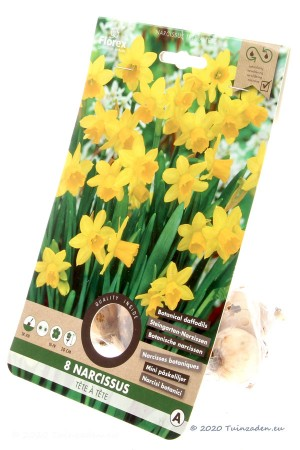 Narcis Tête à Tête - Gele Narcissenbollen