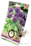 Sierui Purple Sensation - Alliumbollen