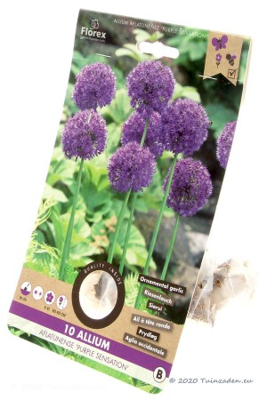 Ornamental onion Purple...