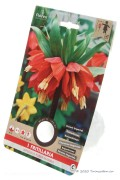 Rode Keizerskroon - Fritillaria Imperialis Rubra Maxima