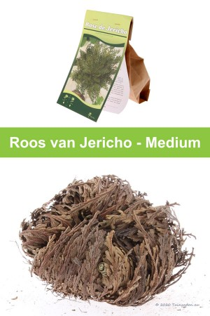Roos van Jericho - Medium