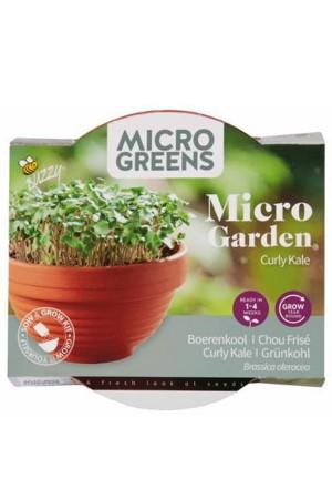 Curly Kale Micro Garden -...
