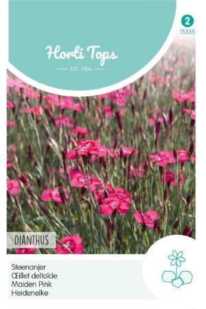 Carmine rose Dianthus -...
