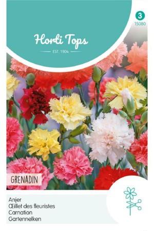 Grenadin Dianthus -...
