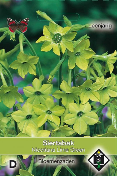 Lime Green Flowering Tabacco - Nicotiana seeds