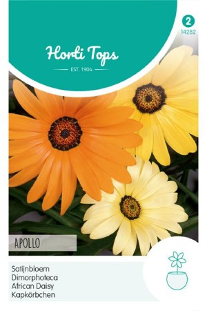 Apollo Osteospermum -...