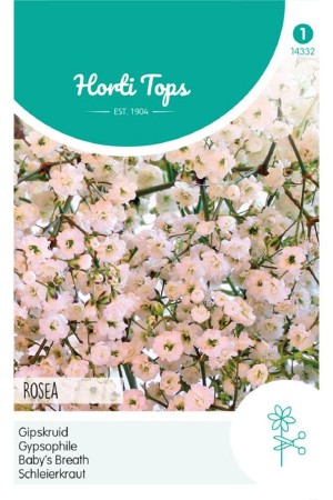 Rosea - Baby's Breath seeds