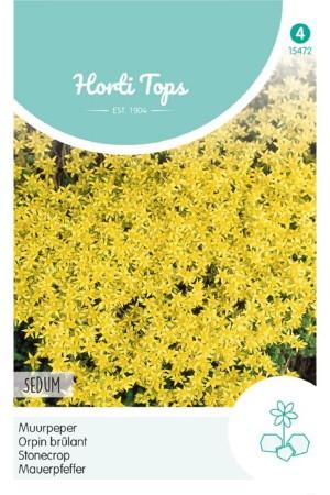 Stonecrop - Sedum seeds
