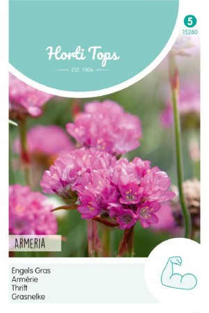 Pink Thrift - Armeria seeds