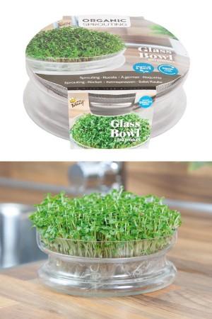 Sprouting grow kit bowl +...