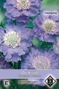 Blue Perfection - Scabiosa seeds