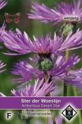 Desert Star Amberboa muricata seeds
