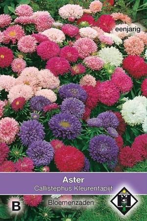 Kleurentapijt Callistephus - Aster zaden