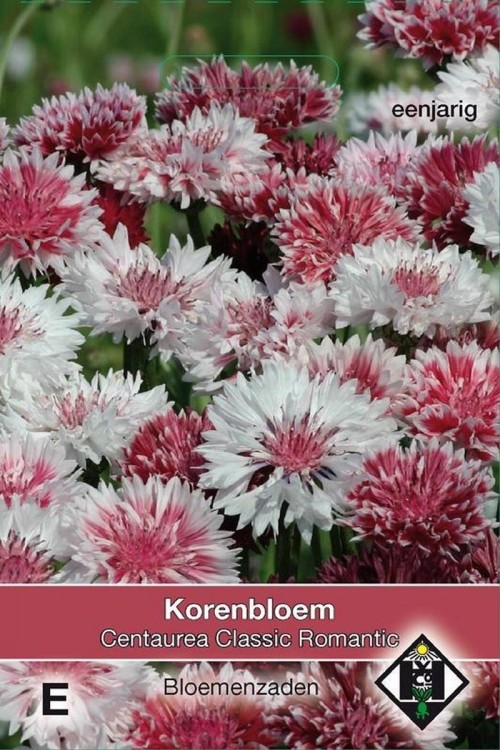 Classic Romantic Centaurea Korenbloem zaden
