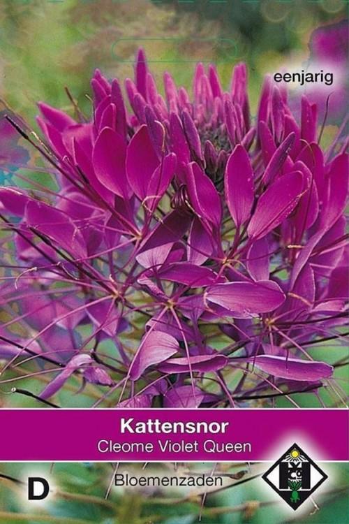 Violet Queen Cleome - Kattensnor zaden