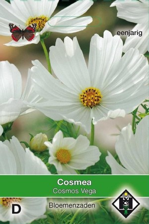 Vega - White Cosmos seeds
