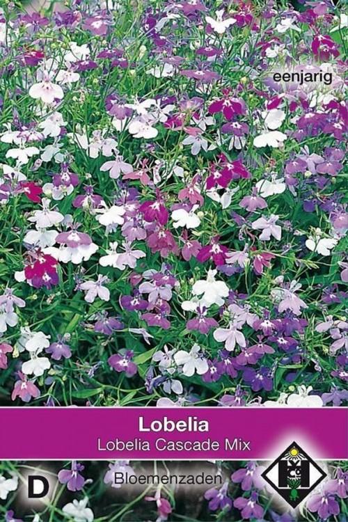 Cascade Lobelia Pendula zaden