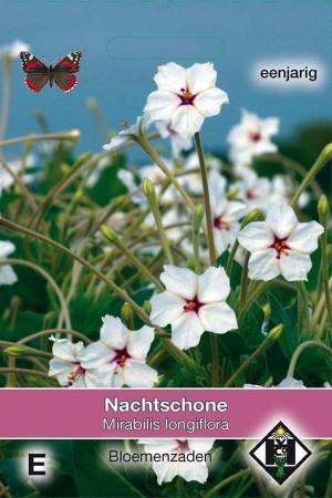 Longiflora Nachtschone...
